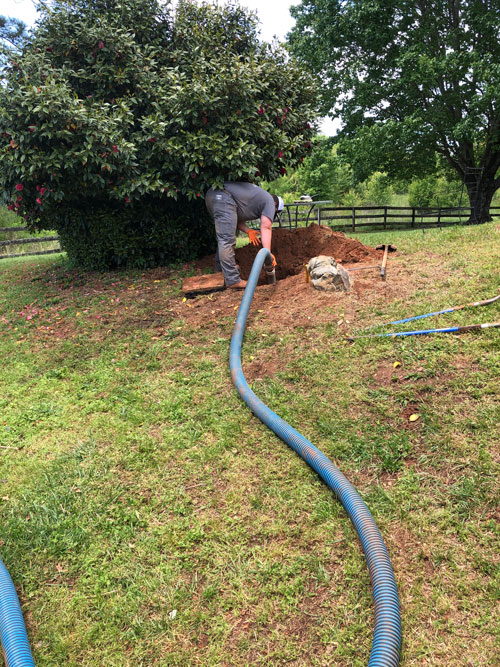 Tree roots are infiltrating your Septic Tanks pipes